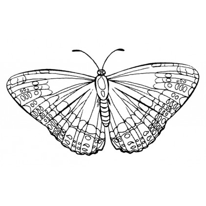 American Art Stamp - Butterfly #1
