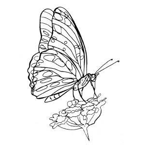 American Art Stamp - Butterfly #4